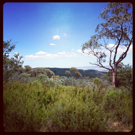 Bushland scenary on Mount Canobolas