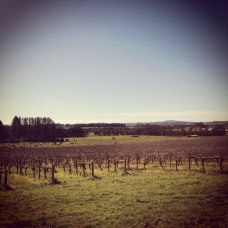 Brangayne vineyard + cellar door